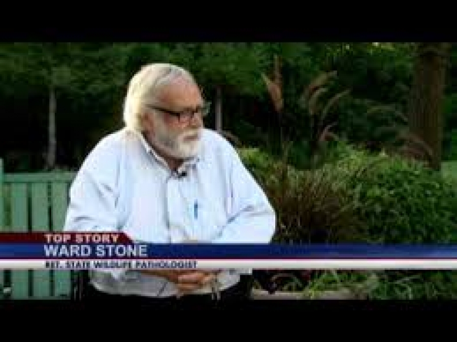 Ward Stone talks about lead in Albany